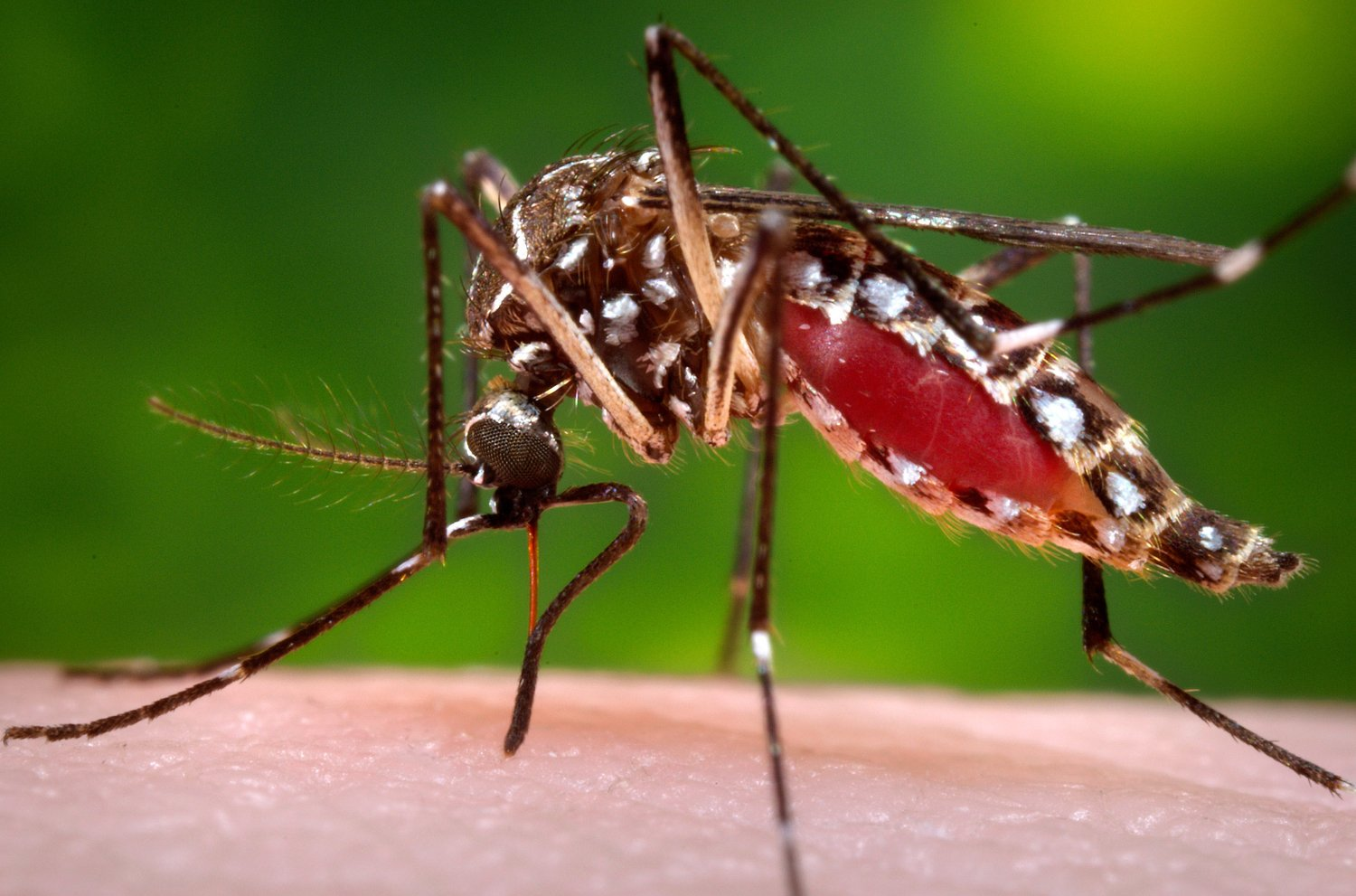 Dengue vaccine could increase dengue's virulence in some settings