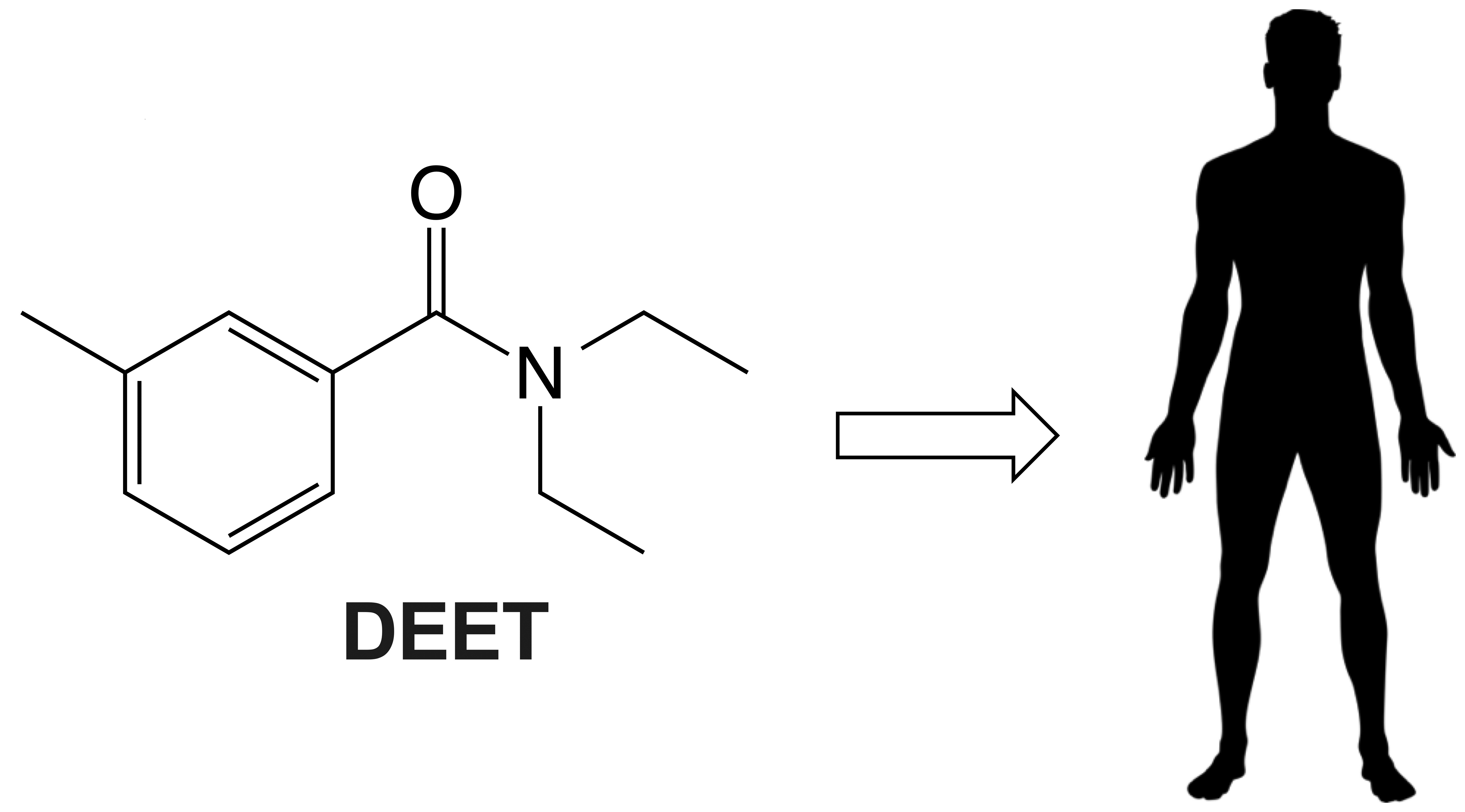 DEET chemical structure next to outline of person