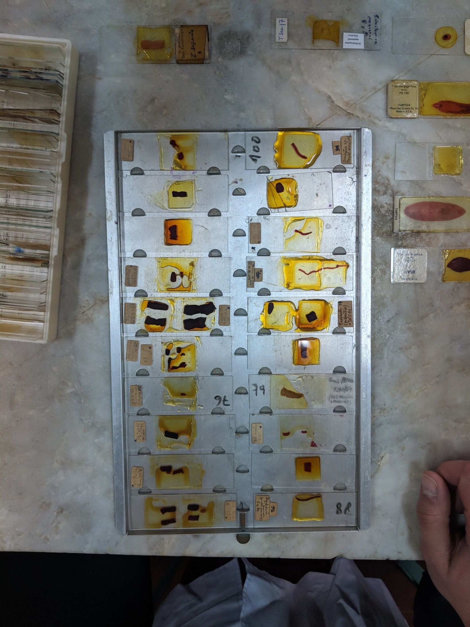 A tray full of parasites mounted to microscope slides.